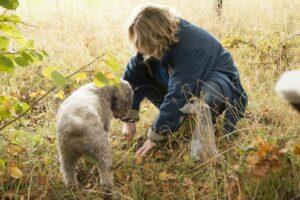 Tryffeljakt med hund
