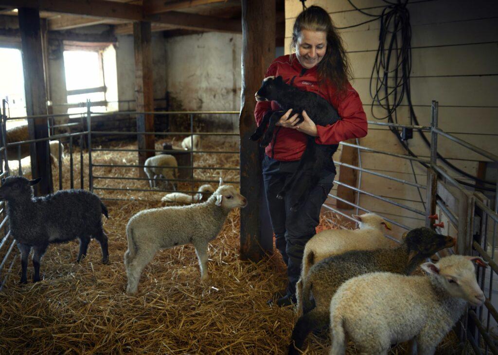 Kvinna med lamm i famnen